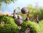 Ants-Photogrpahy-12