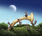 Ants-Photogrpahy-3