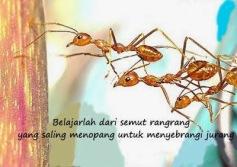 semut+rangrang+copy